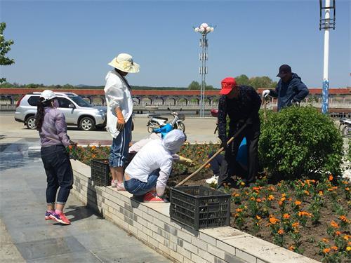 黑龙江省饶河农场公共事业局关工委栽植花卉扮靓边陲小城