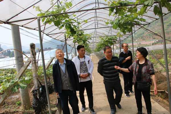 毕节市关工委组织农业专家组到基地现场把脉问诊对症下药